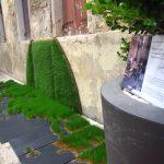Salvatore Falci, 1990 - 2011, Erba Fontena borgo san Jacopo, installazione mostra Alfbeta, Ca Vendramin, Venezia, giugno 2011