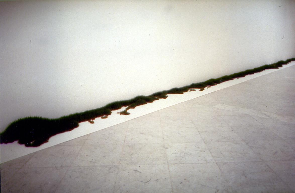 Salvatore Falci, 1990, Erba Portici, galleria Lia Rumma, Napoli copia