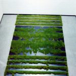 Salvatore Falci, 1990, Erba Ponte Sant'Eufemia in Biennale Venezia, giugno 1990. cm. 405x772