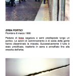 Salvatore Falci, 1990, Erba Portici, Piombino, 8 marzo 1990, scheda